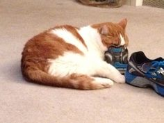 I love to sniff shoes