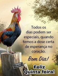 Rooster, Animals, Good Night Msg, Words Of Hope, Poems, Animales, Animaux, Animal, Animais