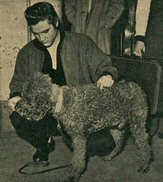 Elvis with his poodle. Feeding dog biscuits to the French Poodle at train station