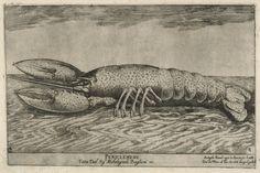 #Animal solitaire et très territorial, le #homard est un #crustacé plutôt apprécié pour sa chair délicate. Il vit essentiellement la nuit dans les eaux marines#numelyo #bestiaire #estampe