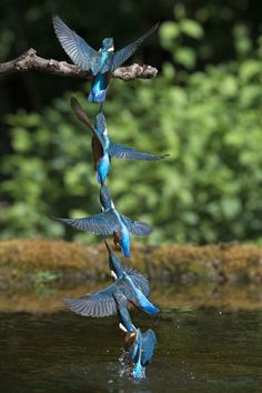 by Daniele Grigoli Exotic Birds, Colorful Birds, Beautiful Birds, Animals Beautiful, Dove Images, Peacock Images, Common Kingfisher, Animal Experiences, Kinds Of Birds