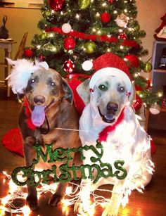 Dogs Christmas card