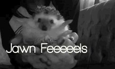 Jawn hedgehog photo jawnfeels.gif