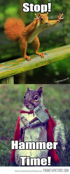 stop hammer time #squirrel #funny