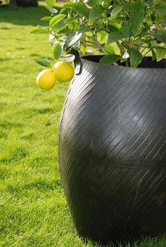 I think these repurposed tire planters are really beautiful, Hen & Hammock. They are, but I'm trying to save money now so all my lovely plastic orange terracotta pots are now on the list to get a gothic makeover! Big Planters, Patio Planters, Tree Planters, Reuse Old Tires, Recycled Tires, Tire Furniture, Design Creation, Tire Art, Used Tires