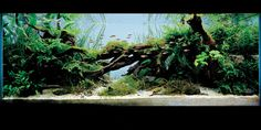 acquarium-design-221.jpg