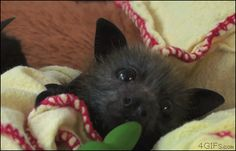 (Don't pretend like mosquitoes aren't the worst.) | Community Post: This Is Why We Should All Love Bats