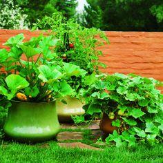 vegetable container garden | sunset magazine