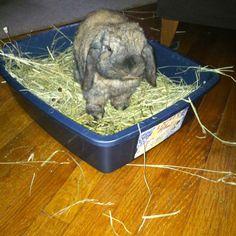 Messy bunner!
