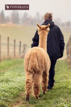 Hey, where are we going? Ok, I will follow you ;) #alpaca #coniraya #alpakino