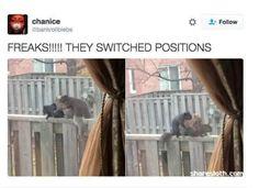 Funny Animal Tweets — 16 Pics