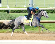 """Mohaymen's workout April 20 at Churchill Downs.  """"That gave me goosebumps,"""" Neal McLaughlin said. """"That was a 'wow' breeze.""""  Shadwell Stable's son of Tapit   cruised a half-mile in :46 4/5 under exercise rider Miguel Jaime, the fastest of 27 works at the distance, in his first workout since struggling home fourth at 4-5 odds in the April 2 Xpressbet.com Florida Derby (gr. I). Churchill clockers caught his splits in :12 flat for the first eighth-mile, :23 3/5 for the quarter, and :35 1"""
