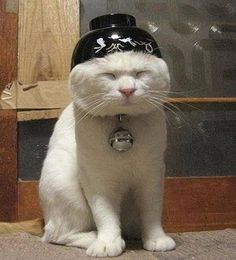 Confucius say cat who wears bowl on head always have food dish nearby.