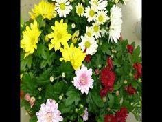Flores y Colores en Otoño, Gracias a mi Vecina.