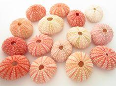 25 Pink Sea Urchin-Beach Wedding Decor-Sea by MermaidCoveGiftShop