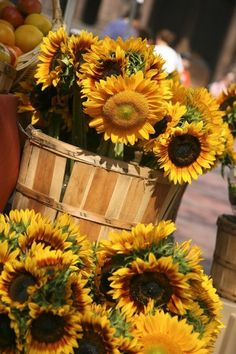 Sunflowers are full of basket.