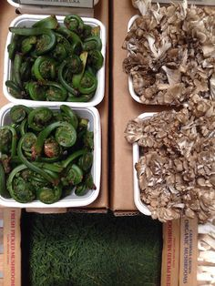 Spring Fiddleheads are a great source of Omega 3 fatty acids  — AG Nutrition Wellness