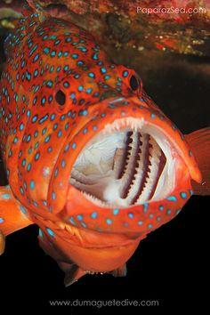 ˚ Weird Sea Creatures, Ocean Creatures, Beautiful Creatures, Underwater Creatures, Underwater Life, Life Aquatic, Beautiful Fish, Exotic Fish, Sea Fish