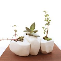 Succulent Rock Trio Planters in White by LandMstudio on Etsy Cacti And Succulents, Planting Succulents, Planting Flowers, Succulent Planters, Air Plants, Garden Plants, Indoor Plants, Cactus Flower, Flower Pots