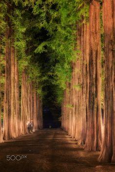 Roadside tree - KOREA