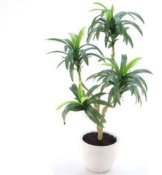 造花ドットコムの光触媒人工観葉植物 8304「【最後の1点です。お早めに。】ドラセナコンシンネ 70cm(白陶器)」(フェイクグリーン)