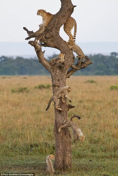 A family tree ;) BelAfrique - Your Personal Travel Planner - www.belafrique.com