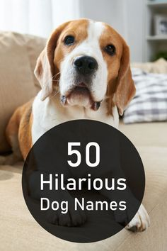 After you find the perfect dog, you need to pick out the perfect name. In this article, find our top 50 favorite dog names that are sure to make you chuckle. #dogmeme #funny #wortharead #dogs #puppy #newdog #dogowners #pound #forthedogs #cutie #laughoutloud Funny Dog Names, Puppy Names, Pet Names, Funny Dogs, Me And My Dog, Girl And Dog, Dog House Kit, Crazy Dog Lady, The Perfect Dog