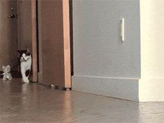 Zoeira : Gatinho leva gatinho para passear