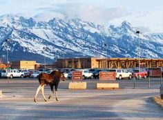 Just strolling through the airport Jackson Hole Airport, Mountains, Gallery, Nature, Travel, Naturaleza, Viajes, Roof Rack, Destinations