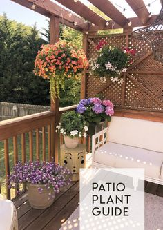 A Patio Plant Guide - IHOD