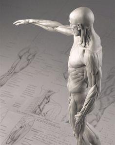 eatonHoudon-anatomyEcorche.jpg (947×1200)