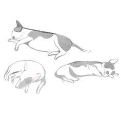 Little Doodles: Illustration