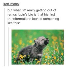 Remus Lupin...transforming...as a five-year-old...it's so cute...and so depressing...