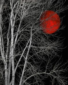 Large Matted Black and White Tree Red Moon by LittlePiePhotoArt