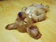 2010.8.29 仰向けに寝る犬