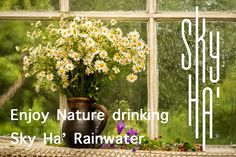 Sky Ha' Rainwater is as pure as it can get. Directly from the Sky for you to drink and purify your body and mind