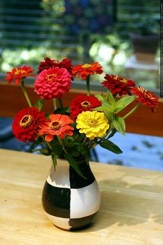 Zinnias reseed easily and love full sun.