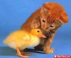 kitten and a chick....cute