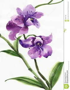 Simple Watercolor Orchids | purple-orchid-watercolor-original-painting-orchids-35207768.jpg