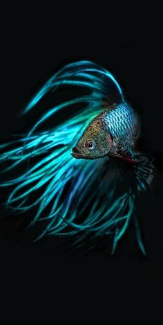 √ Different Types of Betta Fish ( with Beautiful Pictures ) Colorful Fish, Tropical Fish, Neon Tetra, Betta Fish Types, Fish Wallpaper, Siamese Fighting Fish, Beautiful Fish, Pretty Fish, Ocean Creatures