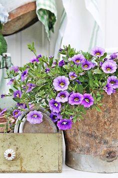 Klart vi må bruke favoritt fargene utendørs i sommer også :) Gamle skatter og blomster sørger for at de herlige fargene dukker opp her og der :)      De herlige sinkbøttene fra Affari har jeg brukt my