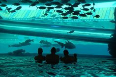 So what if we had a glass slide through the dolphin tank. We have to entertain people some how and since we're not doing a dolphin show we should have some really fun and creative ways to let people see the dolphins. I think we should do this and the shipwreck.