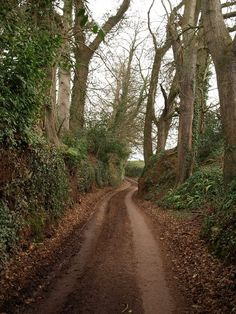 Watts Lane near to East Combe, Somerset