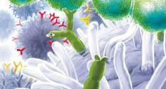 Streptokokken und Antikörper
