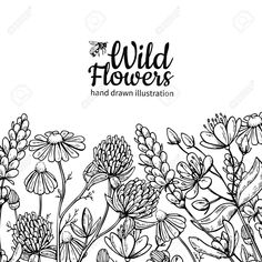 Illustration of Wild flowers vector drawing set. Isolated meadow plants and leaves. Detailed botanical sketch frame vector art, clipart and stock vectors. Flower Pattern Drawing, Floral Drawing, Flower Patterns, Drawing Flowers, Hand Drawn Flowers, Wildflower Drawing, Flower Arrangements Simple, Illustration Blume, Vector Flowers