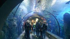 A favorite aquarium?