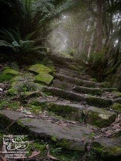 Forest Path - Tasmania by ~myceliae on deviantART