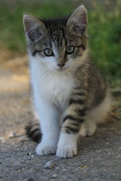 Such a sweet face and coloring, just like my childhood cat!! ♥ xo...