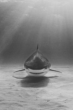 Shark. S)