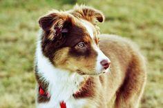 My handsome pup